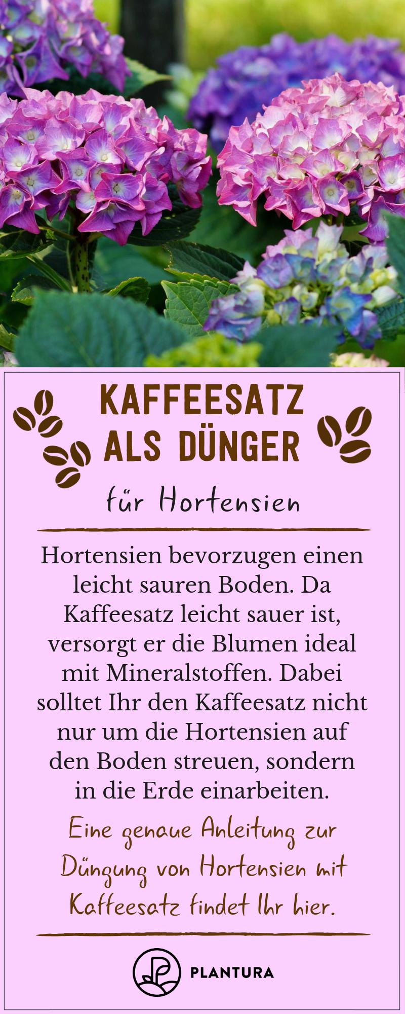 Kaffeesatz als Dünger: Verwendung & Vorteile des Hausmittels #patioplants