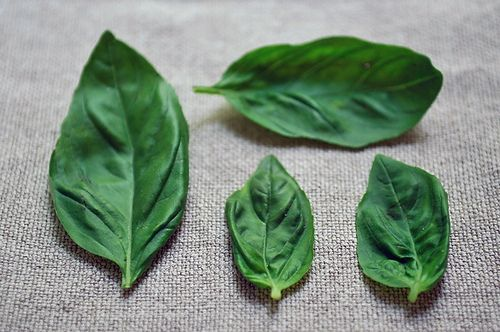 basil recipes from BEST RECIPE USING FRESH BASIL competition.  161 entries