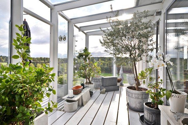 Wintergarten Gestaltungsideen Pflanzen Olivenbaum Orchideen