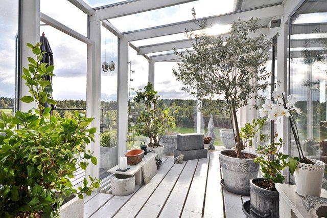 Wintergarten Gestaltungsideen Pflanzen Olivenbaum Orchideen ... Pflanzen Wintergarten Design Ideen