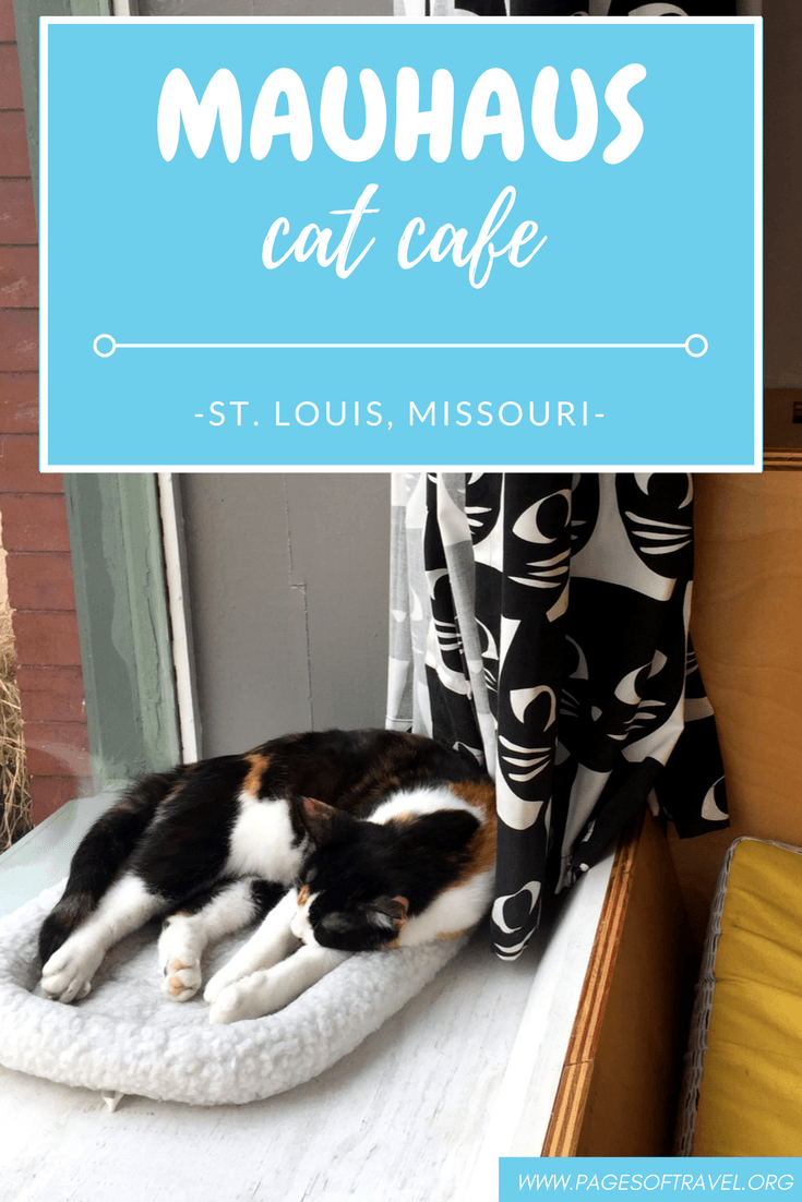 Mauhaus Cat Cafe A Purrfect Experience in St. Louis