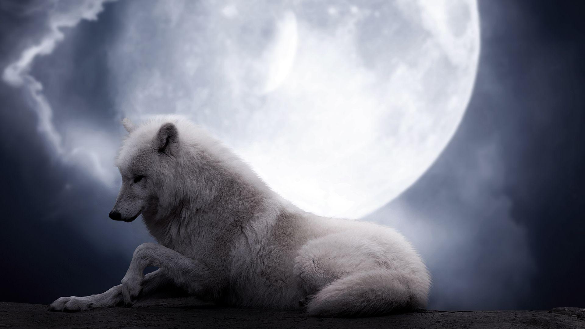 Lobo, noche, Luna, blanco, fantasía, belleza, lobo, Fondo fondo de ...