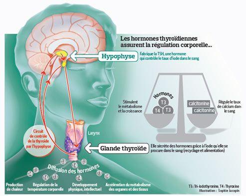 La Thyroide En Mal De Prevention Thyroide Conseil Sante Vie Et Sante