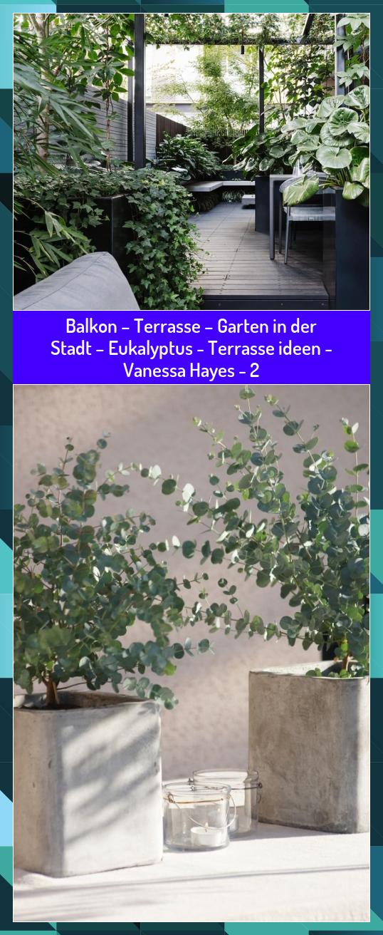 Balkon Terrasse Garten In Der Stadt Eukalyptus Terrasse Ideen Vanessa Hayes 2 Balkon Der Eukalyptus Garten Hayes Ideen In 2020 Garten Plants Terrace