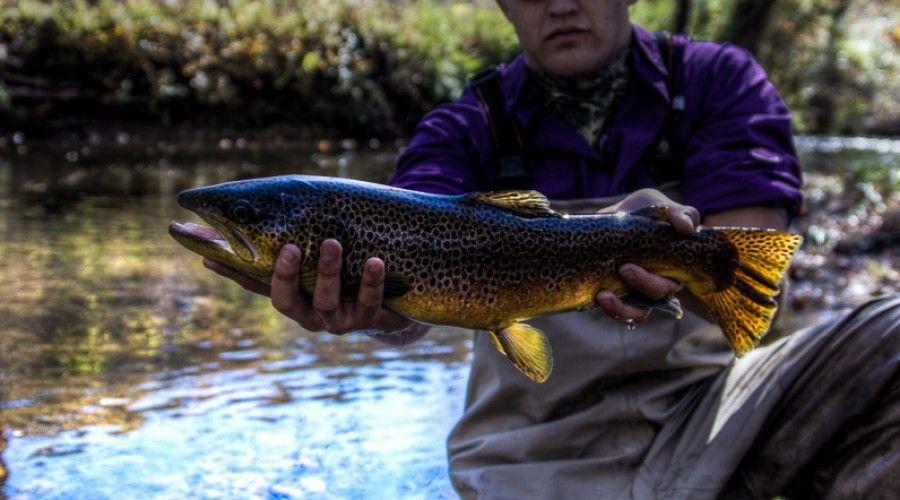 Pin On Blue Ridge Trout Fishing