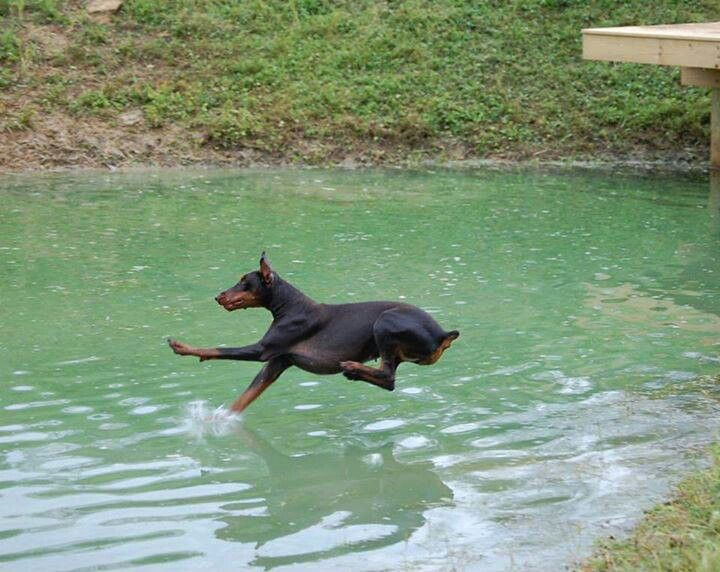 """That moment when the Dobe realizes he or she is about to get wet! """"OH NO-O-O-O!!!!, Landing gear up!"""""""