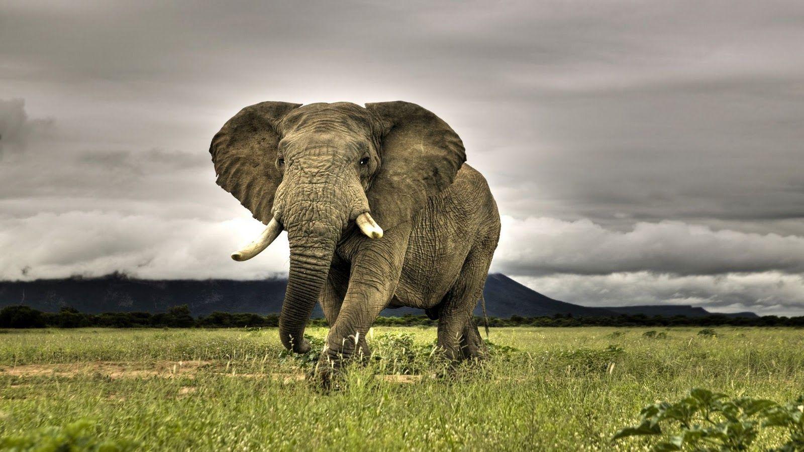 hd wildlife wallpapers | grrr~animals | pinterest | wildlife