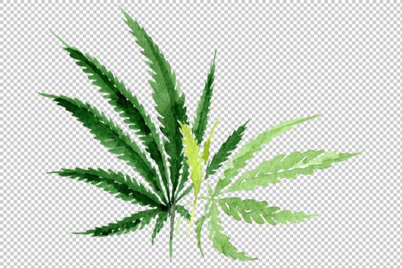 Leaves Hemp Plant Watercolor Png Graphic By Mystocks Creative Fabrica