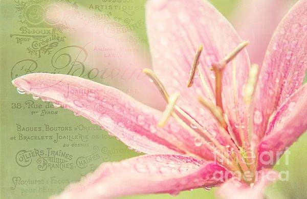 French Nostalgic Lilies by Jenny Rainbow. #Lily #Nostalgic #Flower #Floarl #French Nostalgia #Beauty #Pastel #Lilies #Flower #Elegance #FineArtPrints #JennyRainbowFineArtPhotography Nostalia - A sentimental longing or wistful affection for a period in the past..