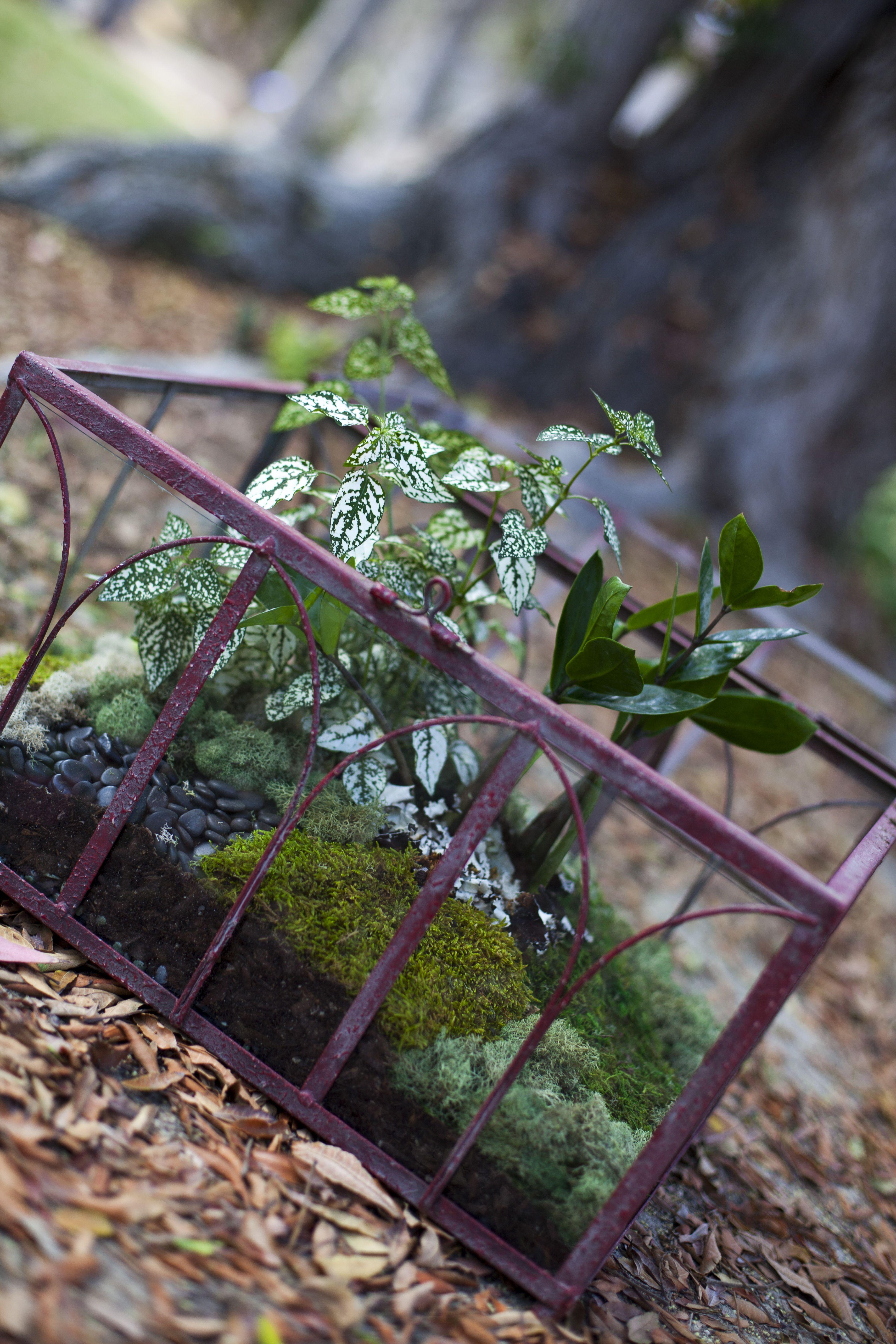 Wardian case terrarium by Erin Sherry