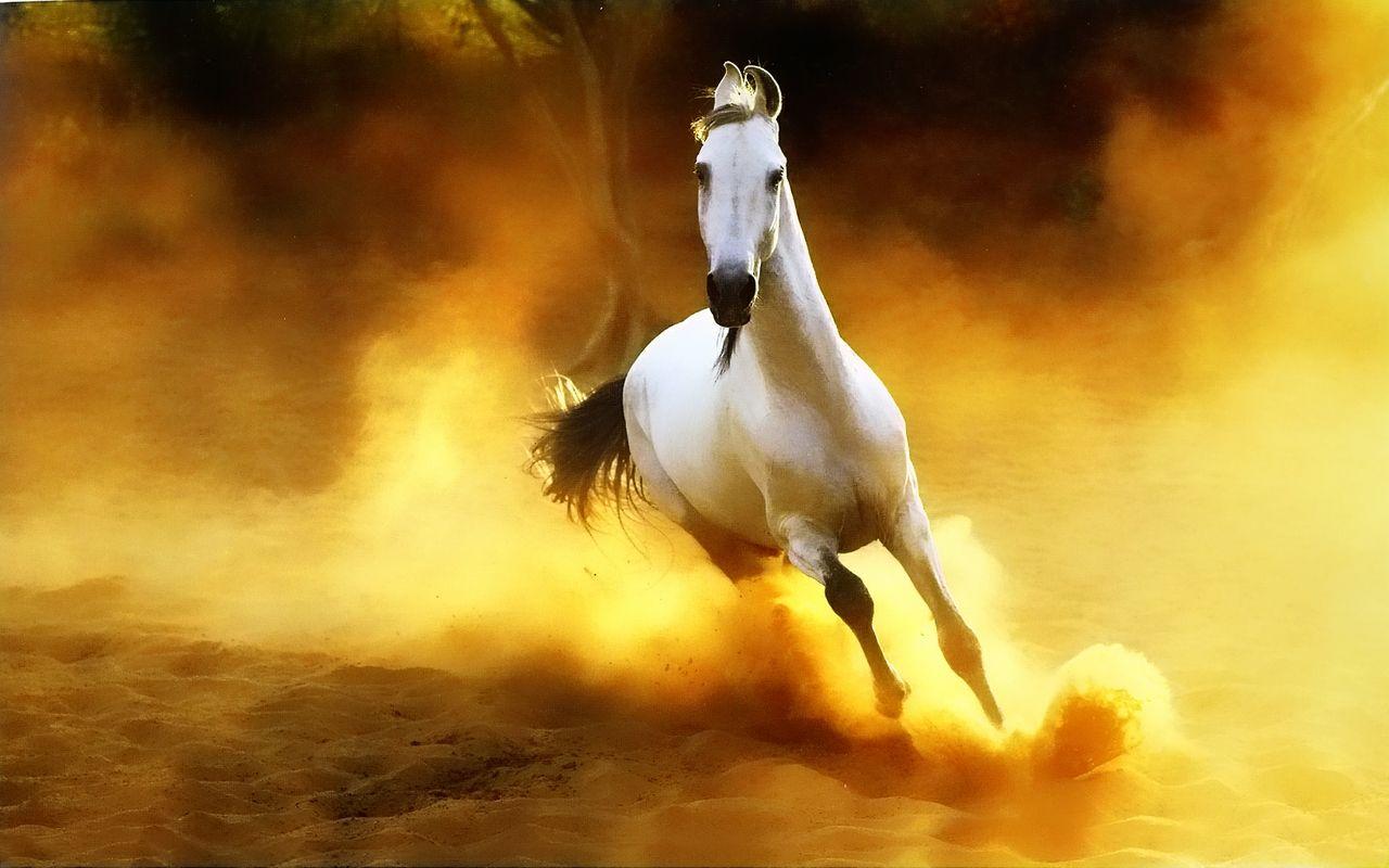 Wild Horse Wallpaper Wild Horses Wallpapers Horse Wallpaper Horses Beautiful Horses
