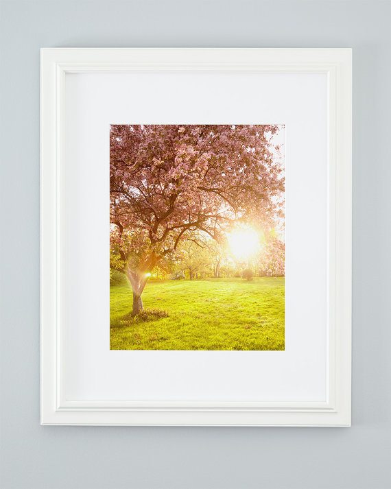 Sunny flowering crabapple tree photograph. Extra large nature print ...