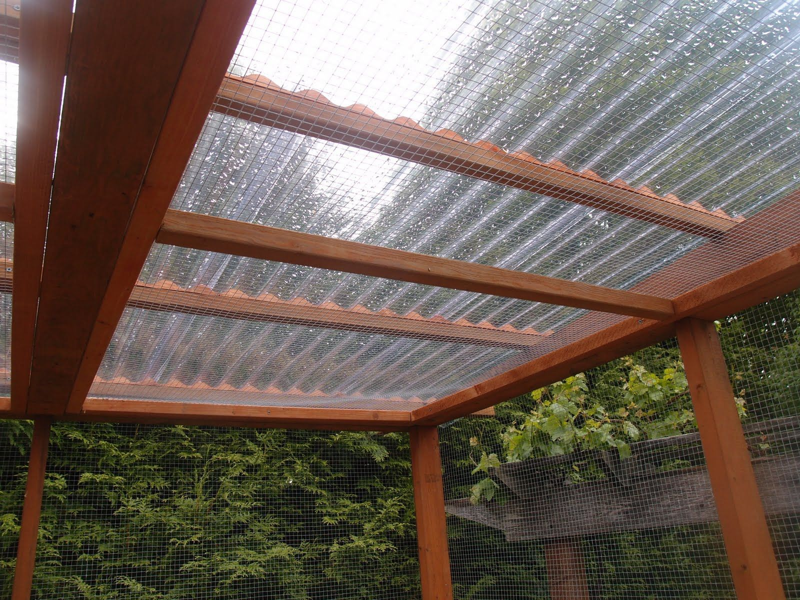 clear corrugated roofing pergola with