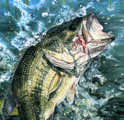 Underwater photos bass image results fishing for Bass fish painting