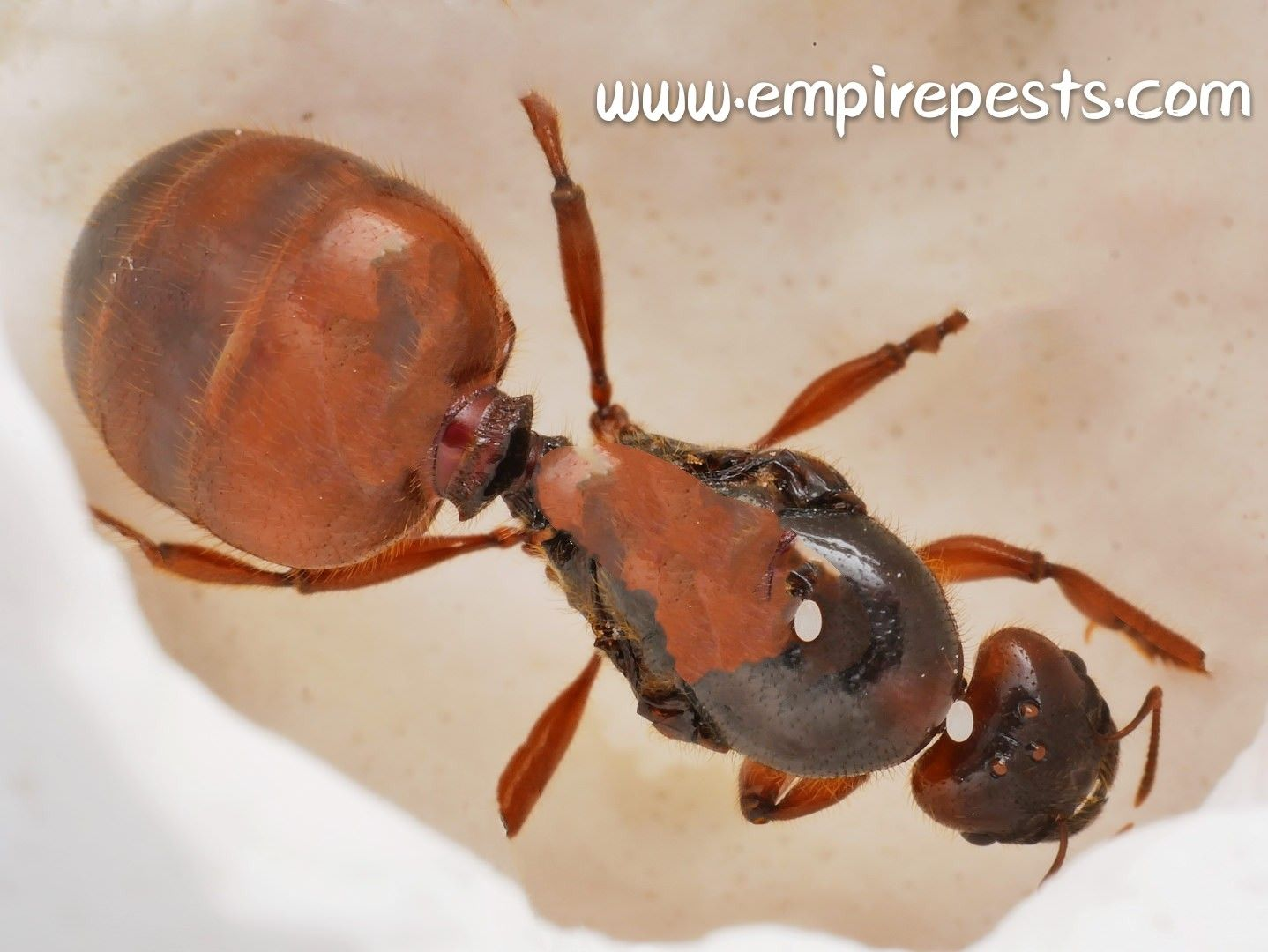 We provide a fast and long term Pest solution. Call Empire
