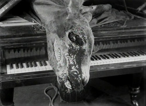 andalusian dog - Google Search | Mystery writing, Luis bunuel, Piano