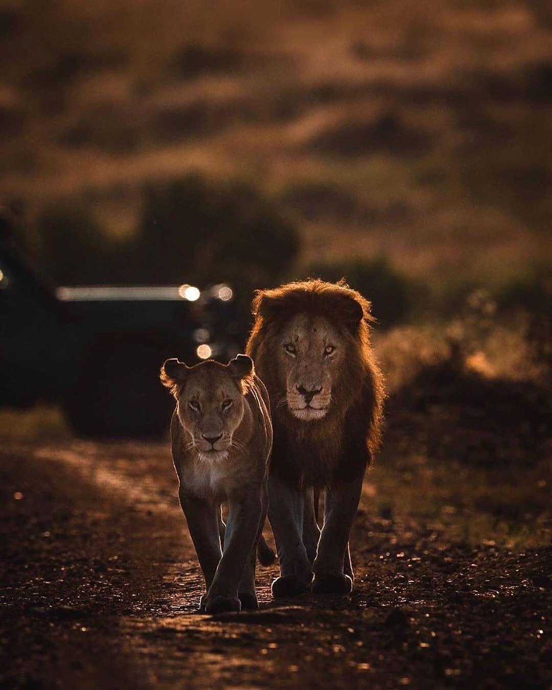 "WildlivePlanet's Instagram profile post: ""Photo by @aamir__khatri #etoshanationalpark #namibiatourism #africanamazing #african_portrait #nikondeutschland #yourshotphotographer…"""