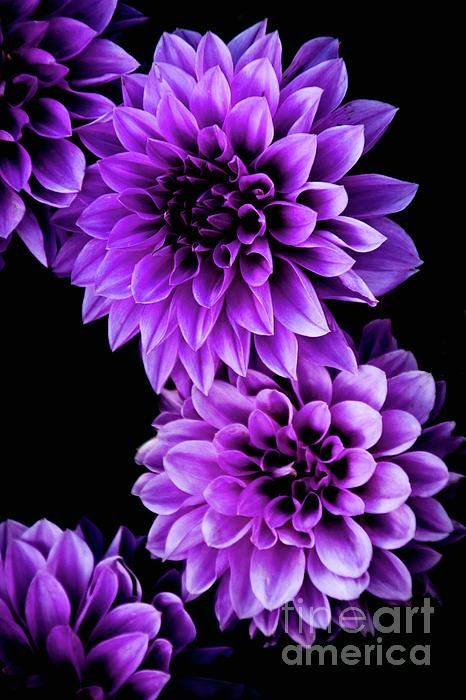 Purple Flowers Purple Flowers Wallpaper Purple Flowers Purple Flower Tattoos