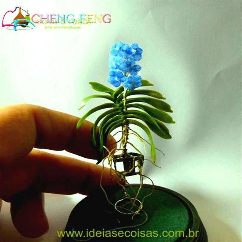100 Pcs Seeds Mini Bonsai Orchid Seeds Indoor Home Miniature Flower ...
