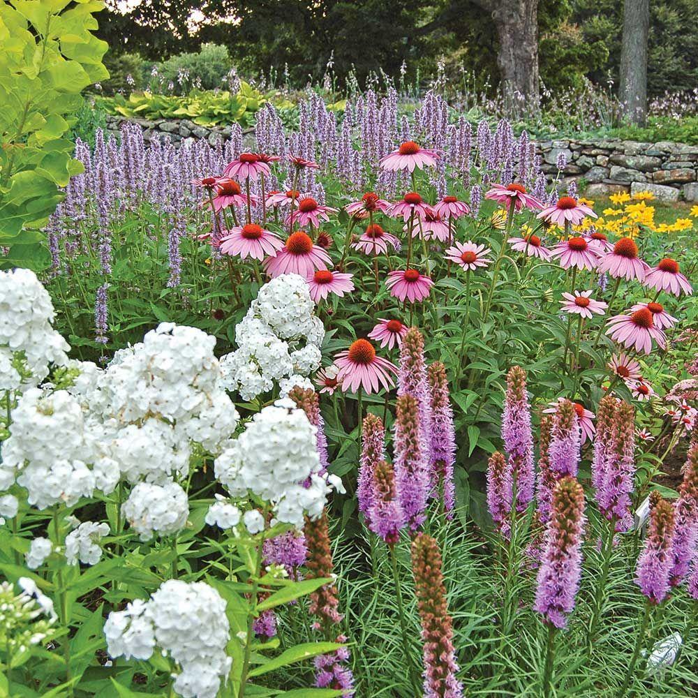 Butterfly Magnet Perennial Collection Pollinator Garden Design White Flower Farm Pollinator Garden
