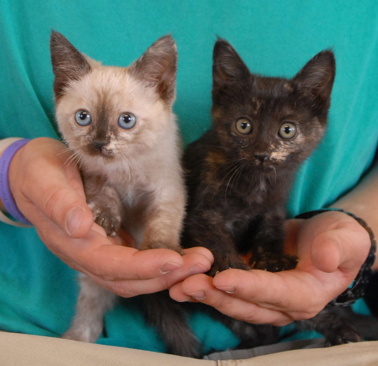 Angie & Tonya are 2 of the 10 motherless young kittens who need ...