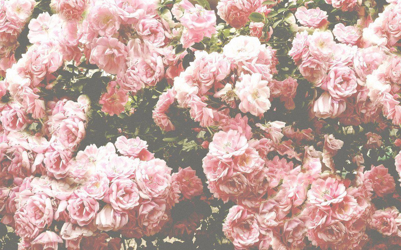 Tenderness Tumblr Backgrounds Flower Wallpaper Laptop Wallpaper