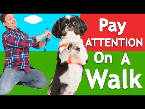 1 New How To Teach Any Dog To Walk Nicely On Leash Youtube
