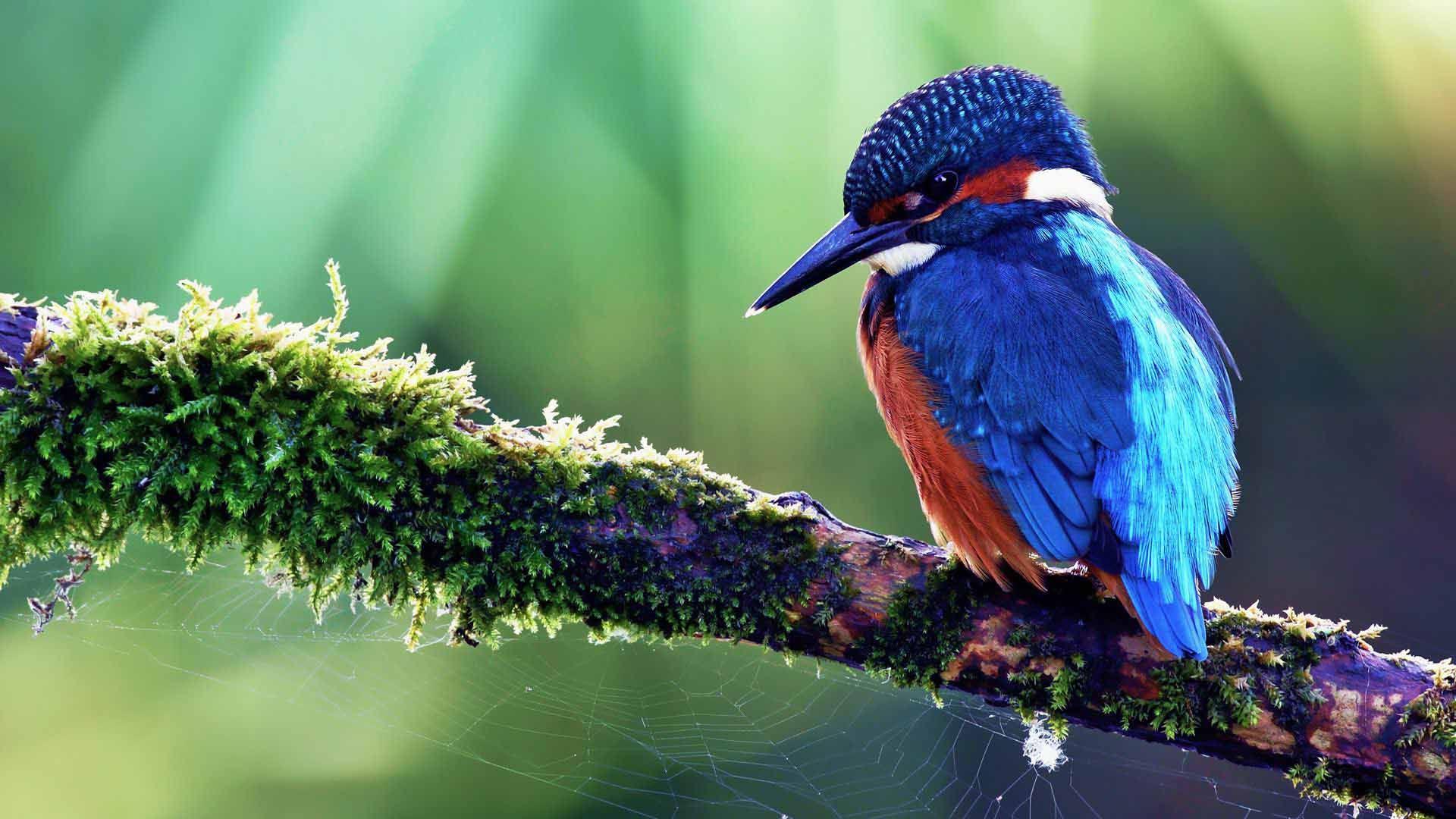 Best 25  Greater bird of paradise ideas on Pinterest | Bird of ...