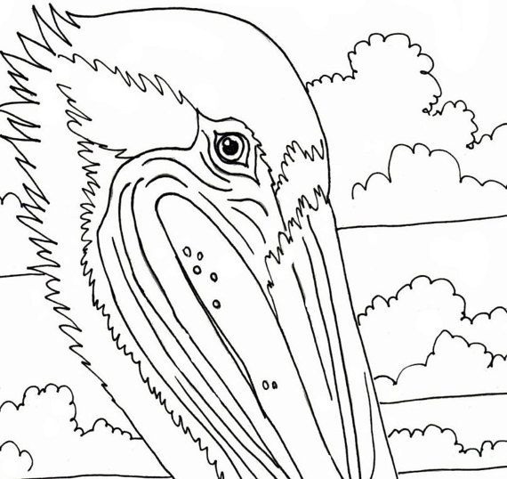 Pelican Coloring Page Beach Art Digital By Adultcoloringbook