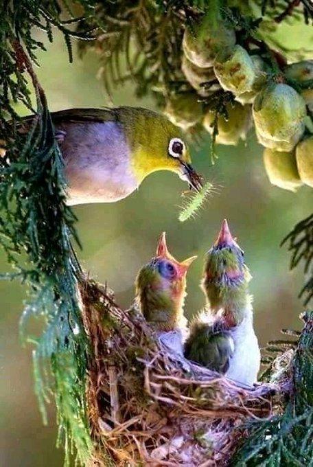 Mary Sol On Twitter Beautiful Birds Pretty Birds Birds