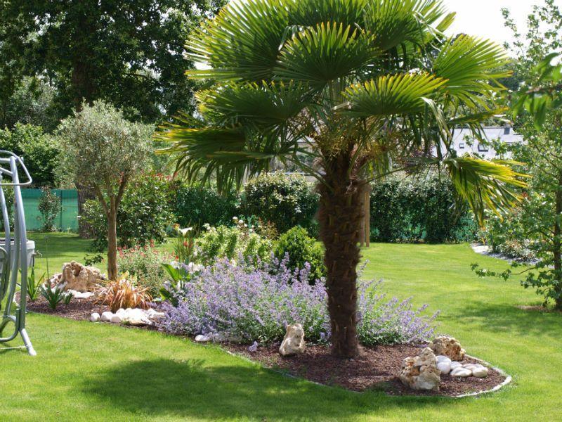 25 Impressionnant Idees De Jardin Avant Avec Palmiers Pour Petit