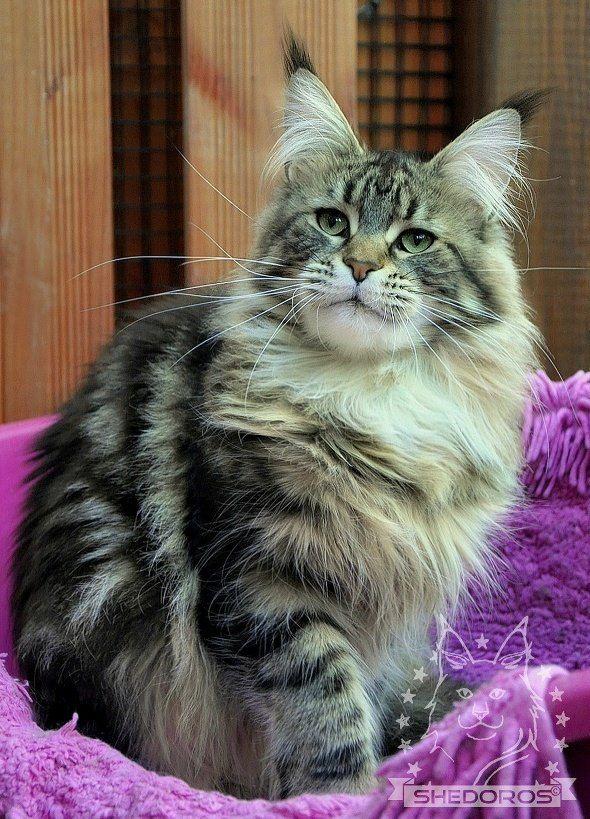 Lo más hermoso que he visto | Kittens cutest, Cats ...