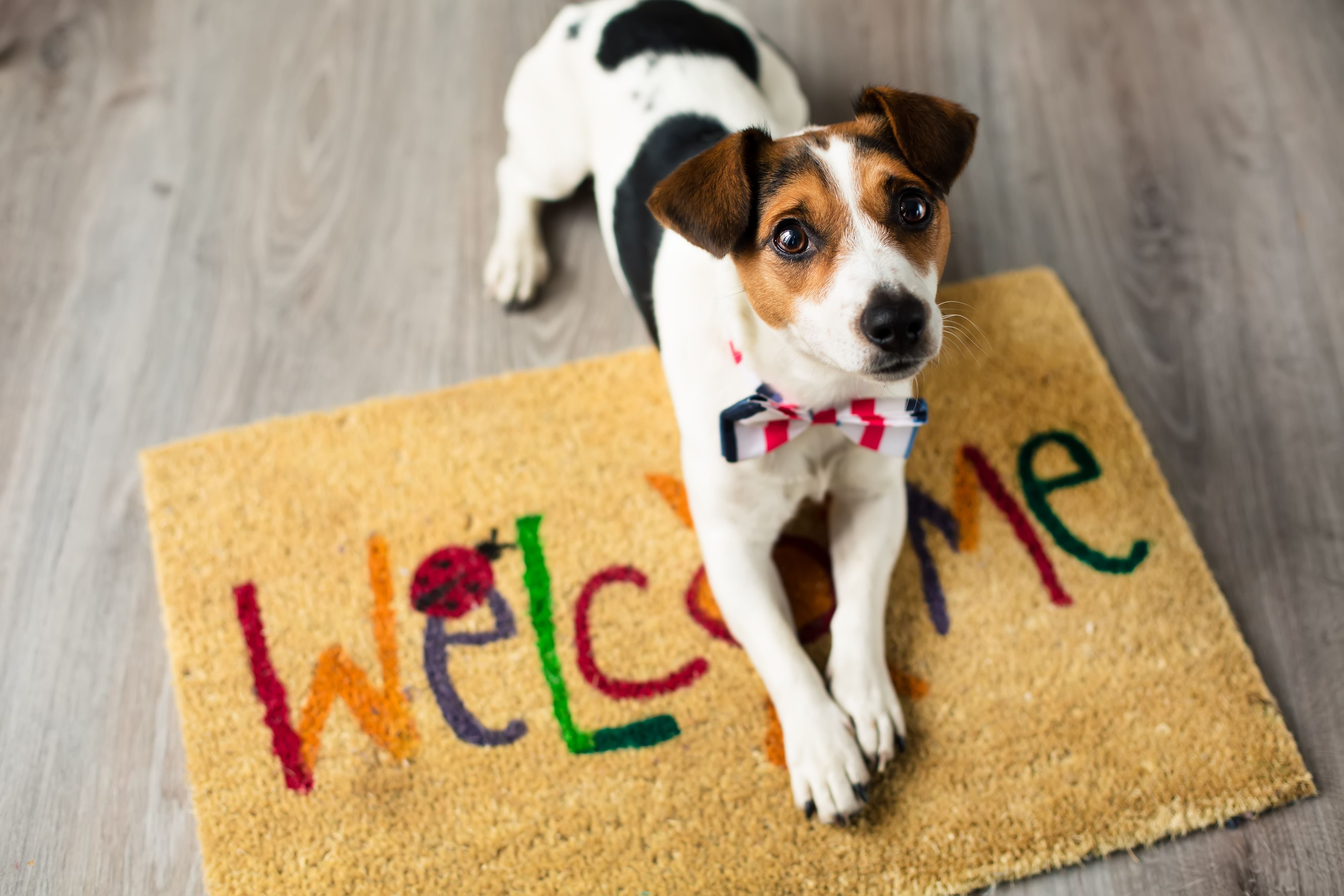 The Pet Friendly Home Dog Friends Dogs Shelter Dogs