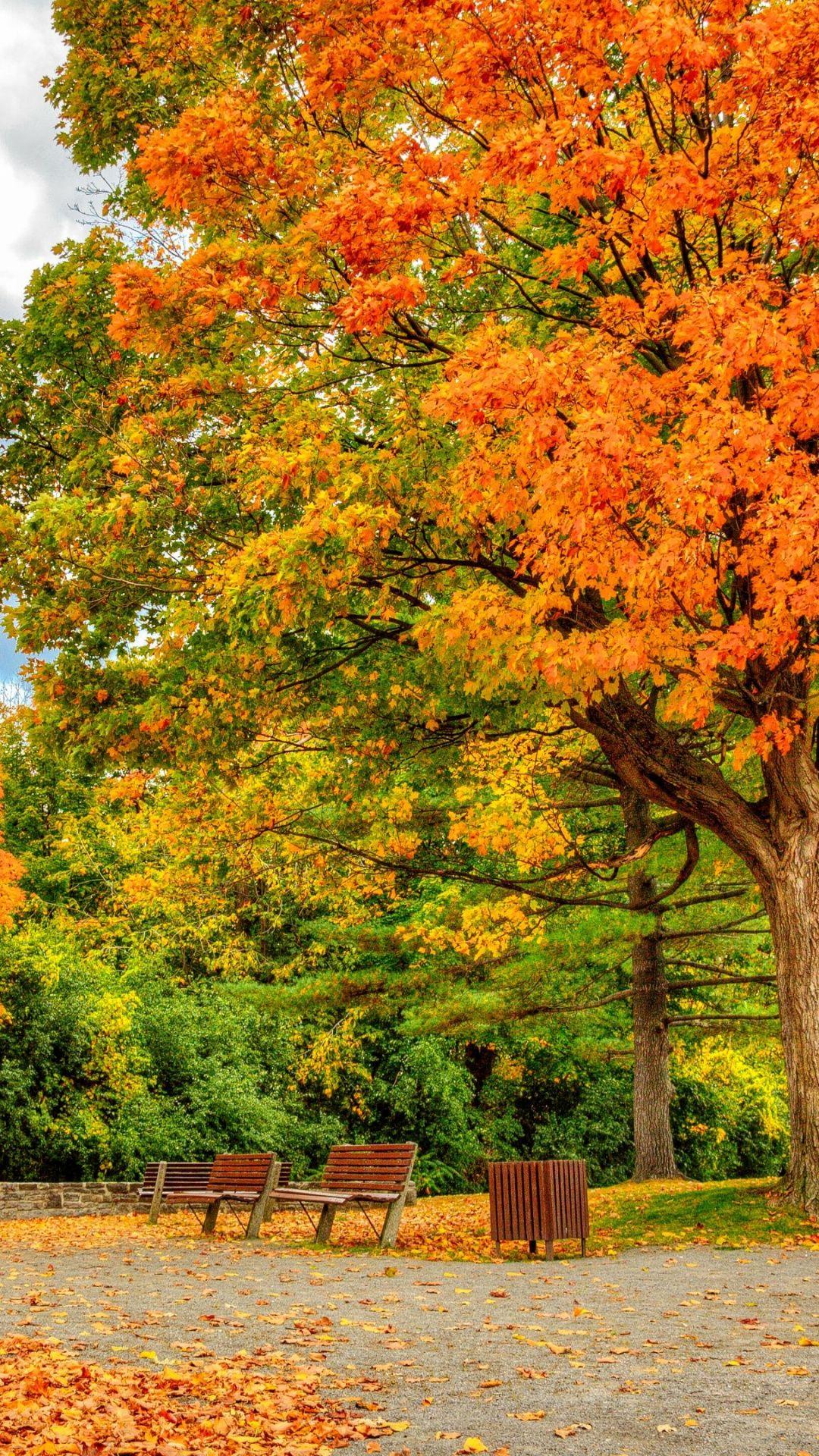 Wallpapers leaf, summer, landscape, maple tree, nature (с