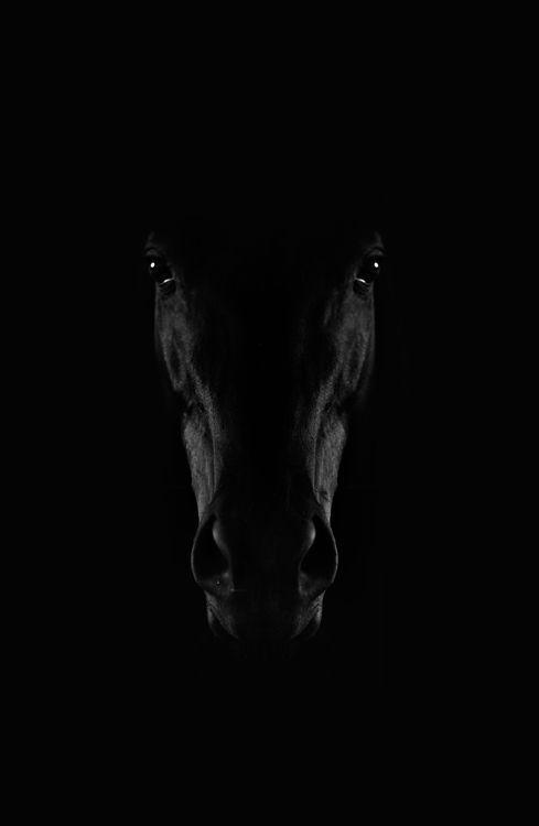 Photo of Schwarzes Pferd Foto von Adis Spahic – National Geographic Your Shot