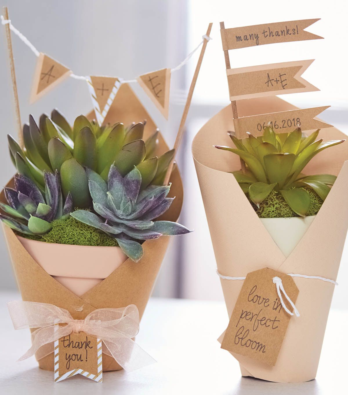 How To Make Succulent Wedding Favors Cheap wedding