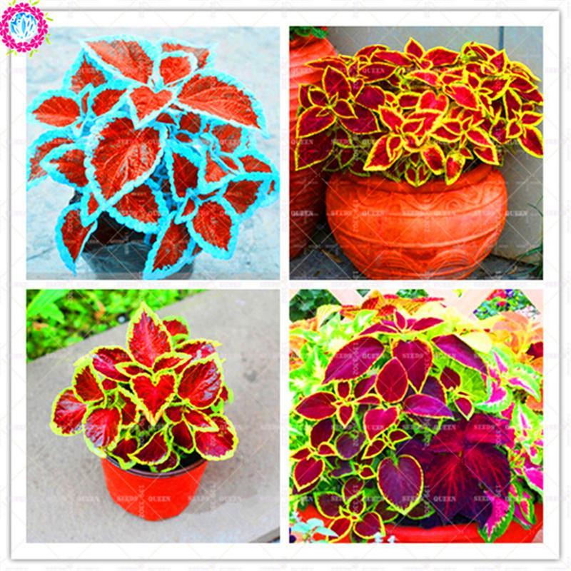 rainbow tree care products