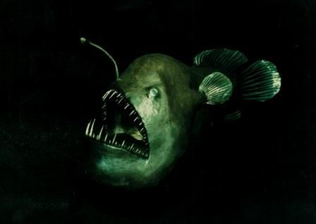 17 best images about trenchlife on pinterest | deep sea creatures, Reel Combo