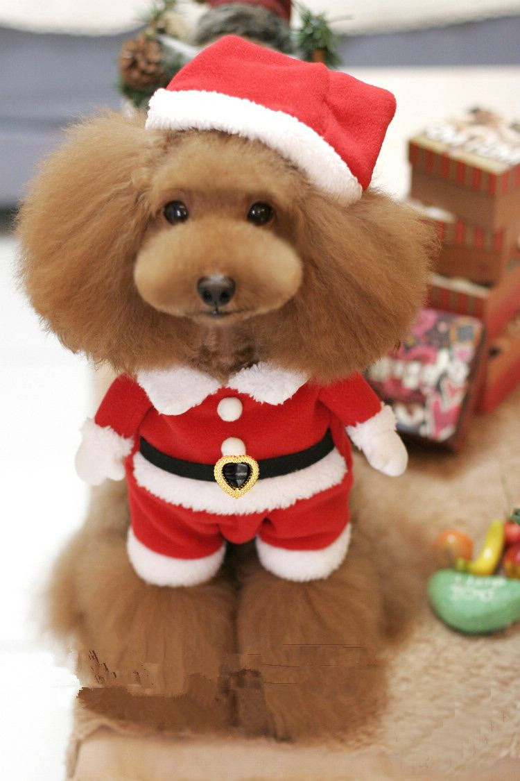 Christmas Dog Wear Promotion Online Shopping For