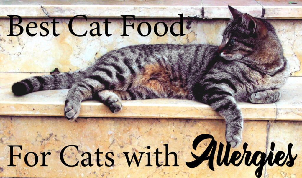If Your Cat Is Having An Allergic Reaction Or Your Veterinarian Has Recommended A Hypoallergenic Diet Consider The Following Food Cat Care Pets Cats Grey Cats