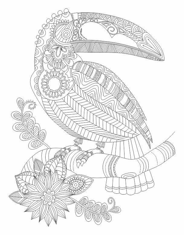 Toucan bird Abstract Doodle Zentangle