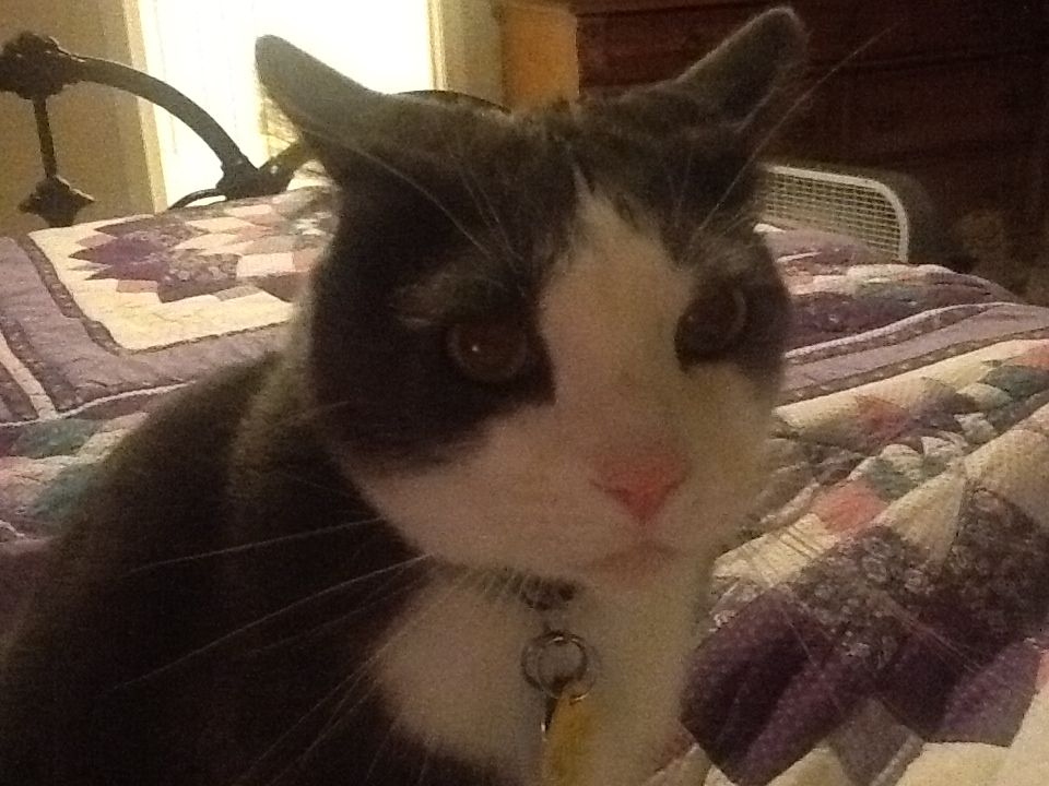 Kitty mad because he wants treats