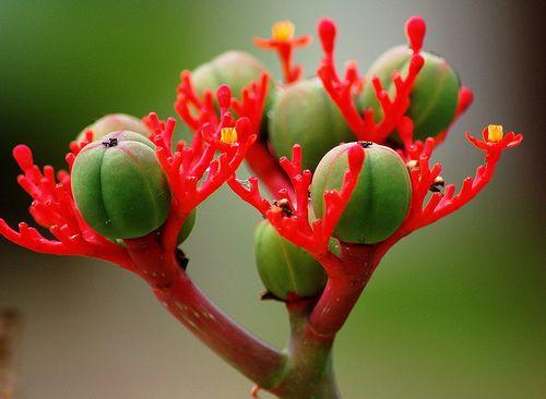 Strange Plant In Mbeya Tanzania Unusual Plants Plants