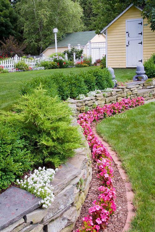Stone Wall With Pink Flowering Wax Begonias Iberis Atop Stone Wall Evergreen Shrubs Buxus Landscaping Retaining Walls Backyard Landscaping Planting Flowers
