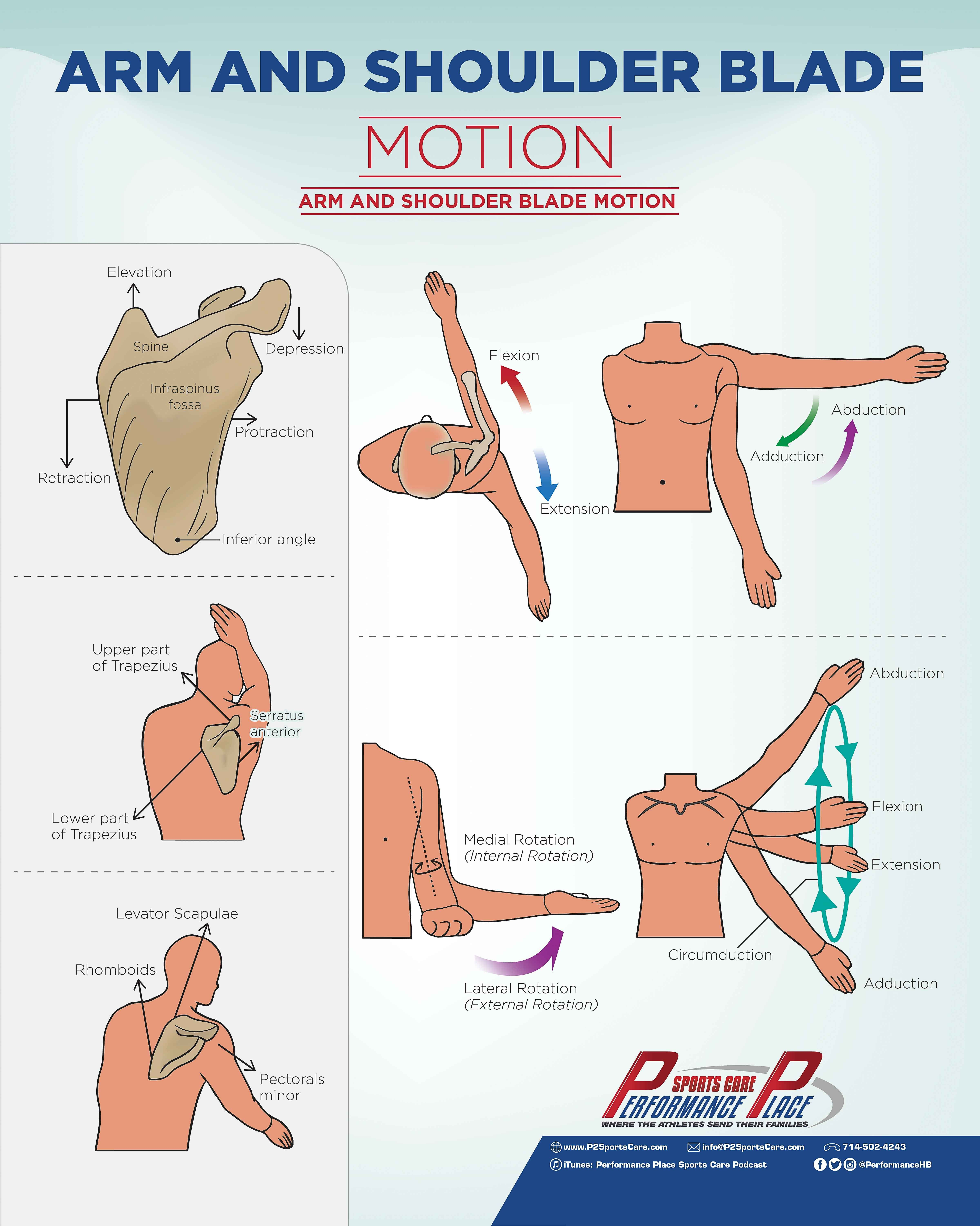 Scaption Motion In The Scapular Plane Roughly 30