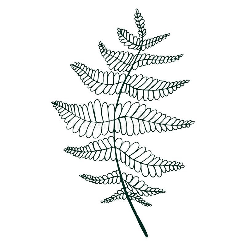 Pin By Kate Thompson On Fern Drawings Coloring Pages How To Draw Hands Color