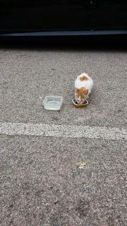 RED - Urgencias Gatos: SUPER SOS HOSTALRICH/GERONA , Gatitos abandonados en hostalric (girona)