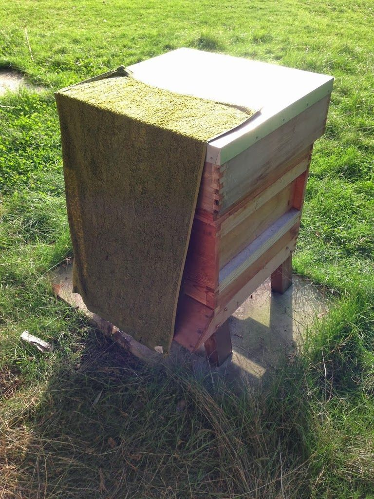 find out how to ward off robbing bees using this rather bizarre