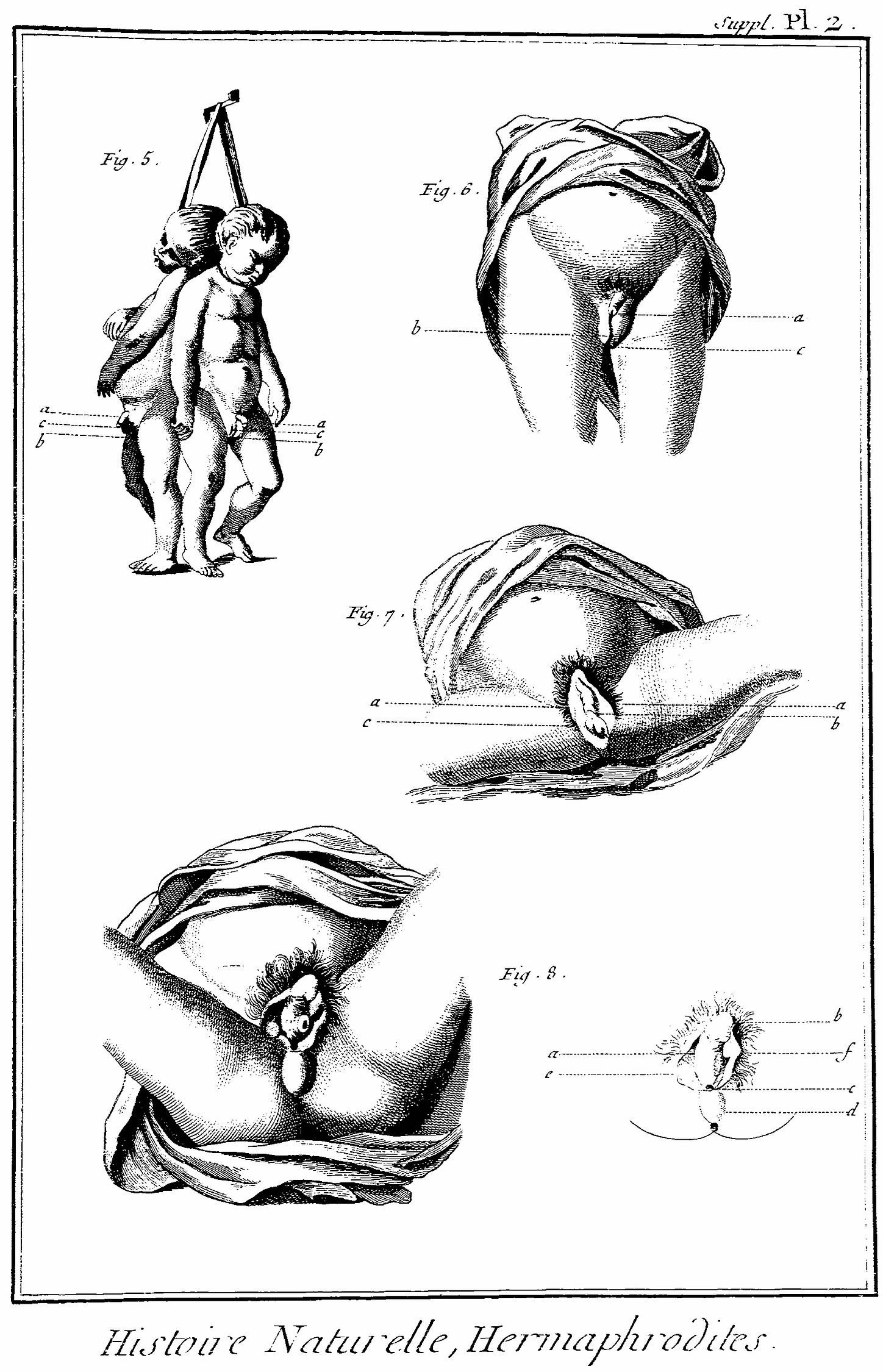 Histoire Naturelle Planche Clvii Recueil De Planches D