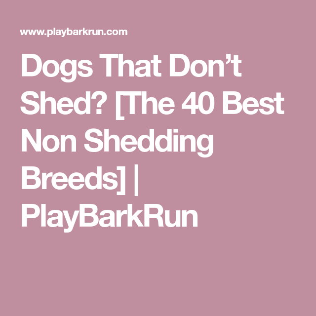 Dogs That Don't Shed? [The 40 Best Non Shedding Breeds